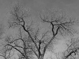Les branches d'un arbres se déploient suivant le schéma des fractales