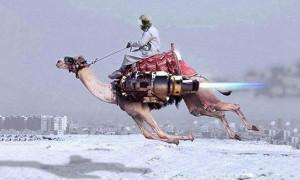 chameau volant Crédit: eden-saga.com
