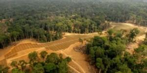 Gabon : champs convertis à la culture du palmier à huile dans la luxuriante forêt de Kango, à 60 km de Libreville. © AFP PHOTO / XAVIER BOURGOIS