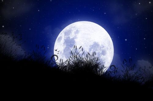 Article : Faites-nous la nuit
